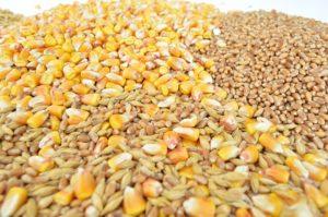 alimentation-céréales-locales